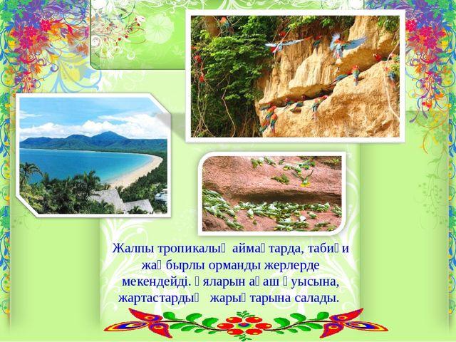 Жалпы тропикалық аймақтарда, табиғи жаңбырлы орманды жерлерде мекендейді. Ұял...