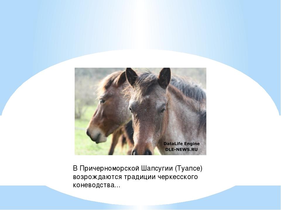 В Причерноморской Шапсугии (Туапсе) возрождаются традиции черкесского конево...