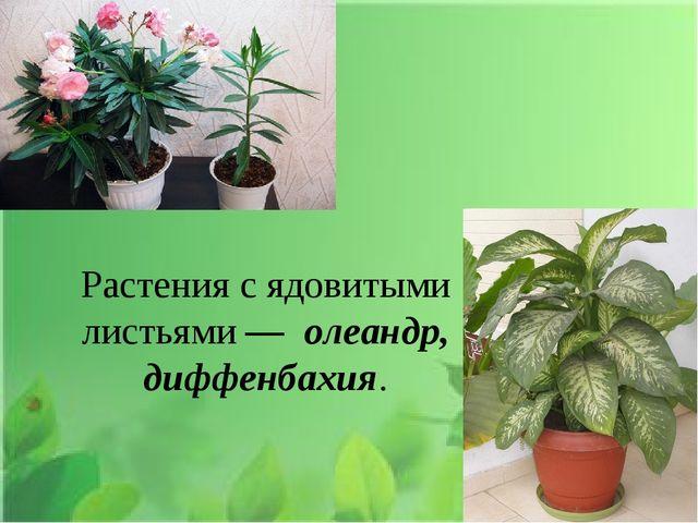Растения с ядовитыми листьями — олеандр, диффенбахия.