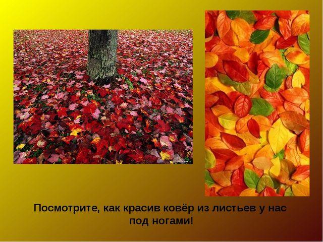 Посмотрите, как красив ковёр из листьев у нас под ногами!