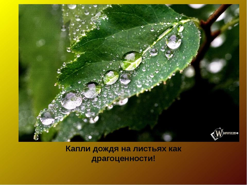Капли дождя на листьях как драгоценности!