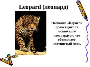 Leopard (леопард) Название «leopard» происходит от латинского «леопардус», ч