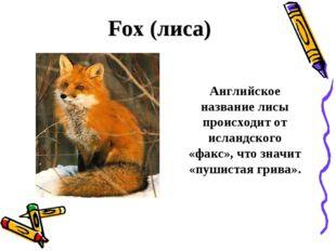 Fox (лиса) Английское название лисы происходит от исландского «факс», что зн