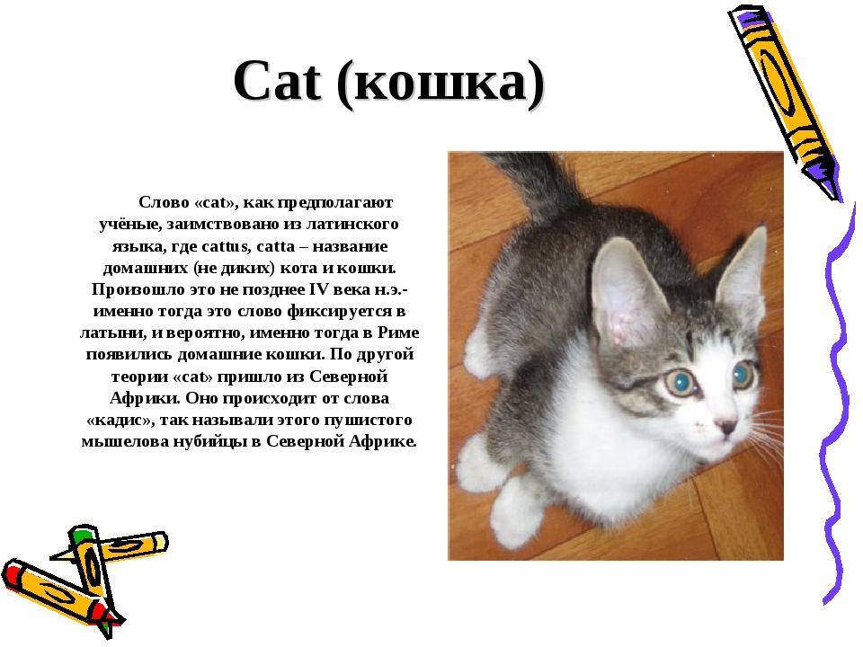 Cat (кошка) Слово «cat», как предполагают учёные, заимствовано из латинского...