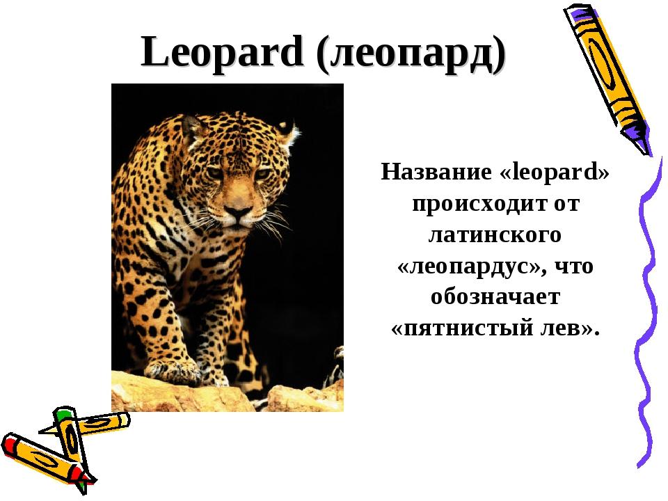 Leopard (леопард) Название «leopard» происходит от латинского «леопардус», ч...