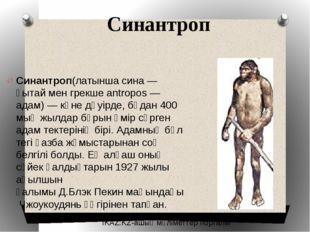 Синантроп Синантроп(латынша сина — қытай мен грекше antropos — адам) — көне д