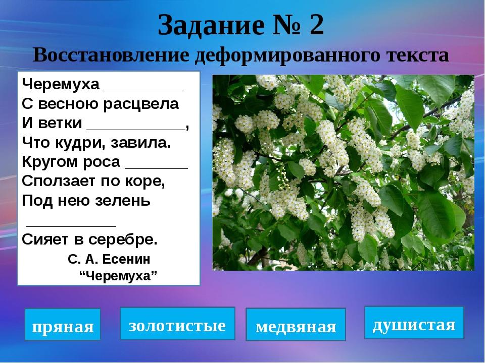 Задание № 2 Восстановление деформированного текста Черемуха _________ С весно...