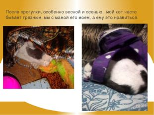 После прогулки, особенно весной и осенью, мой кот часто бывает грязным, мы с