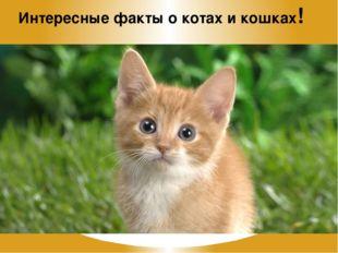 Интересные факты о котах и кошках!
