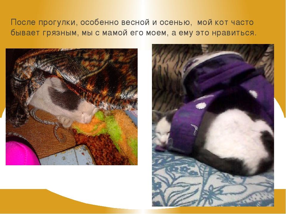 После прогулки, особенно весной и осенью, мой кот часто бывает грязным, мы с...