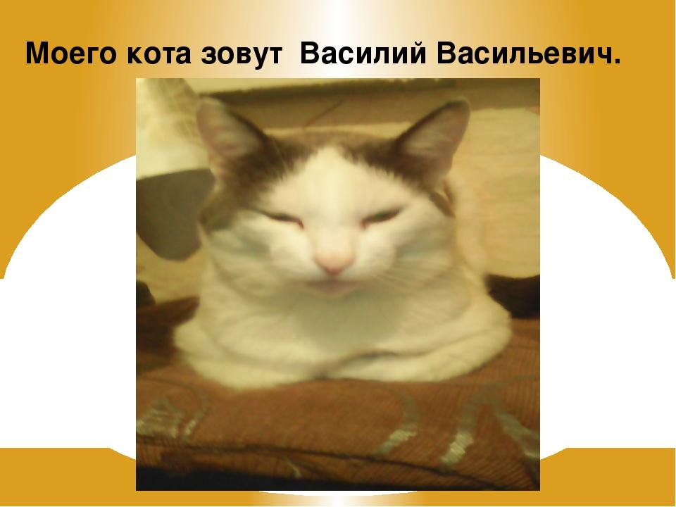 Моего кота зовут Василий Васильевич.