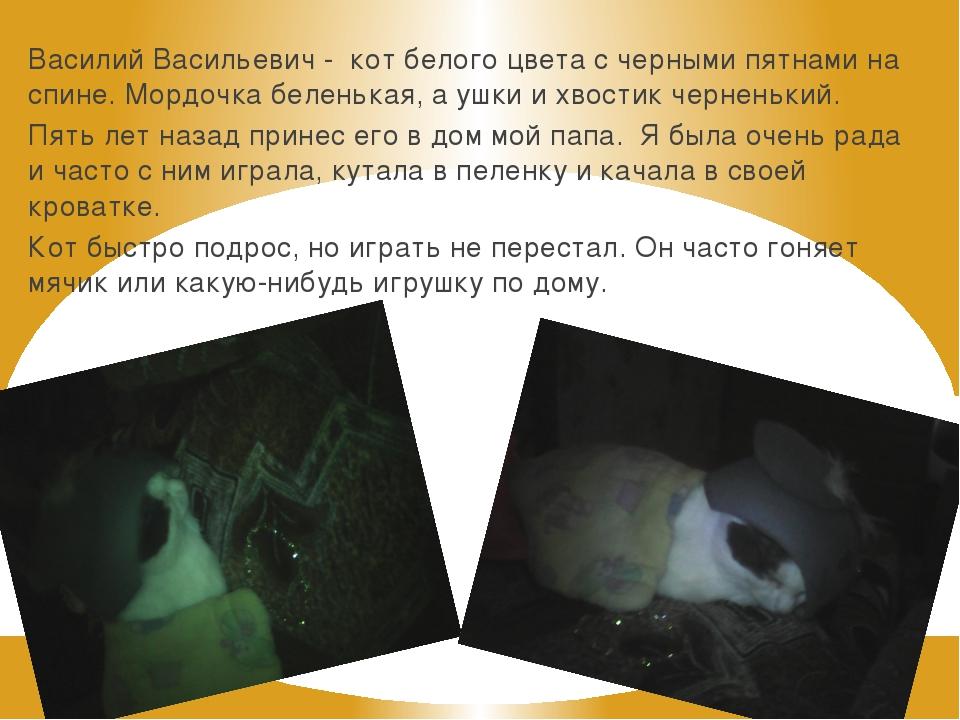 Василий Васильевич - кот белого цвета с черными пятнами на спине. Мордочка бе...
