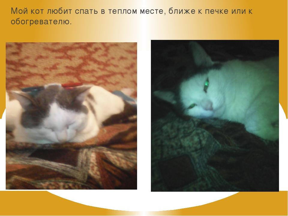 Мой кот любит спать в теплом месте, ближе к печке или к обогревателю.