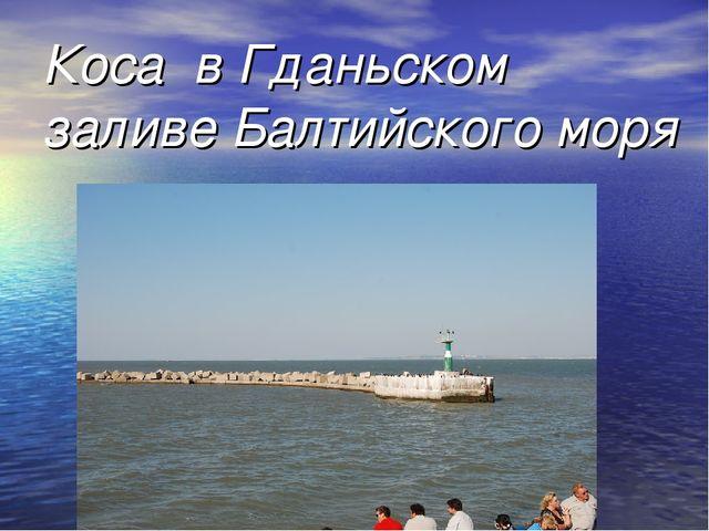 Коса в Гданьском заливе Балтийского моря