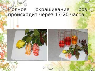 Полное окрашивание роз происходит через 17-20 часов.