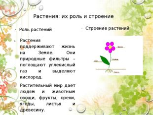 Растения: их роль и строение Роль растений Растения поддерживают жизнь на Зем