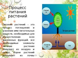 Процесс питания растений Питание растений – это процесс поглощения и усвоения