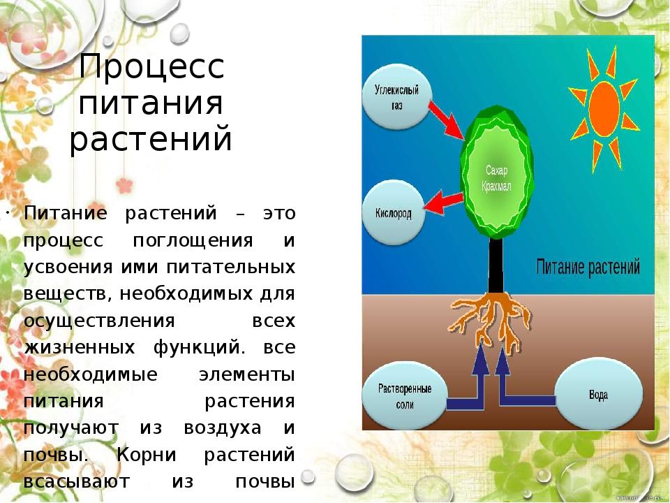 Процесс питания растений Питание растений – это процесс поглощения и усвоения...