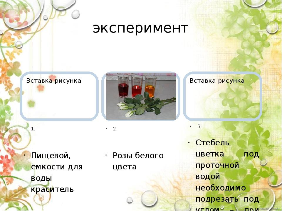 эксперимент 1. Пищевой, емкости для воды краситель 2. Розы белого цвета 3. Ст...