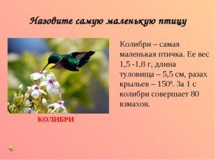Назовите самую маленькую птицу Колибри – самая маленькая птичка. Ее вес 1,5 -