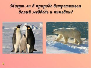 Могут ли в природе встретиться белый медведь и пингвин?