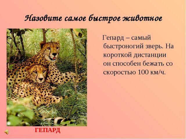 Назовите самое быстрое животное Гепард – самый быстроногий зверь. На короткой...