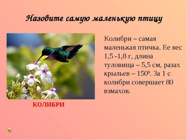 Назовите самую маленькую птицу Колибри – самая маленькая птичка. Ее вес 1,5 -...