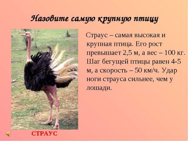 Назовите самую крупную птицу Страус – самая высокая и крупная птица. Его рост...