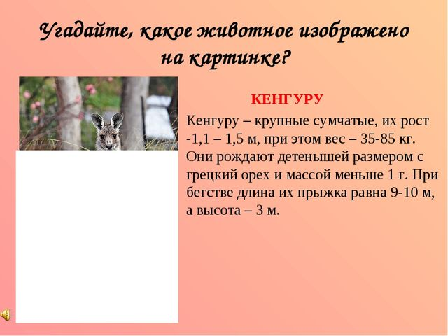 Угадайте, какое животное изображено на картинке? КЕНГУРУ Кенгуру – крупные су...