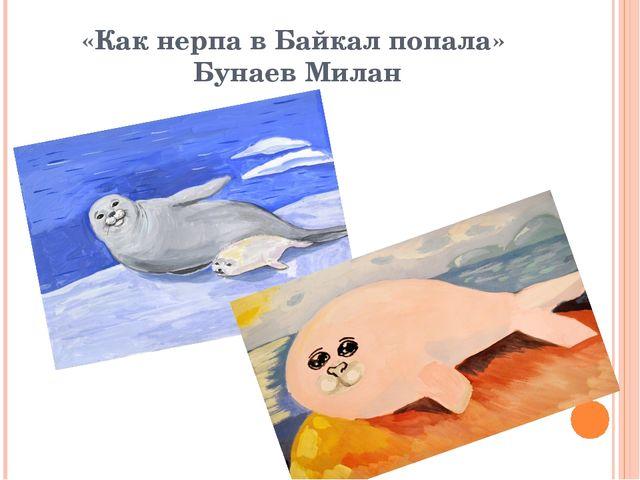 «Как нерпа в Байкал попала» Бунаев Милан
