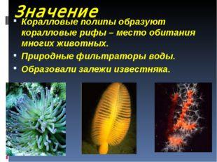 Значение Коралловые полипы образуют коралловые рифы – место обитания многих ж