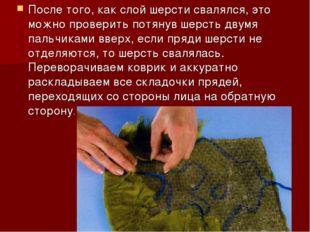 После того, как слой шерсти свалялся, это можно проверить потянув шерсть двум