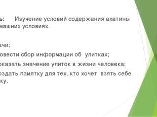 Цель: Изучение условий содержания ахатины в домашних условиях. Задачи: 1.Про
