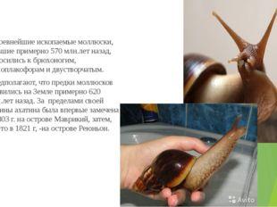 Древнейшие ископаемые моллюски, жившие примерно 570 млн.лет назад, относилис