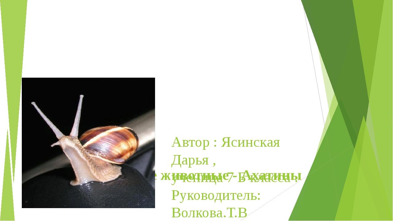 Домашние животные - Ахатины Автор : Ясинская Дарья , ученица 7 Б класса . Ру...