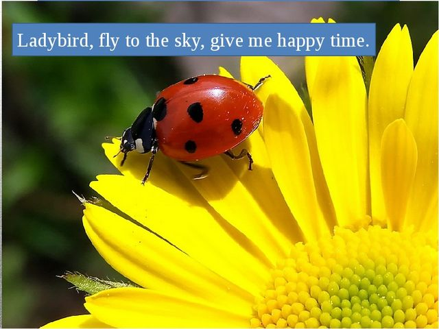 Ladybird, fly to the sky, give me happy time.