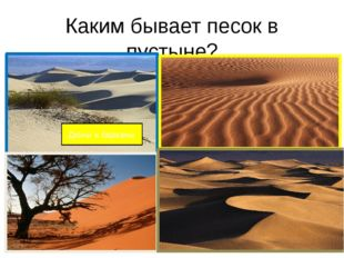 Каким бывает песок в пустыне? Дюны и барханы
