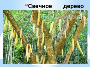 Свечное дерево