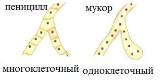 hello_html_m655e4fed.jpg