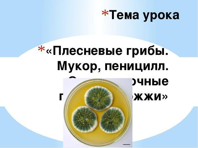 «Плесневые грибы. Мукор, пеницилл. Одноклеточные грибы - дрожжи» Тема урока