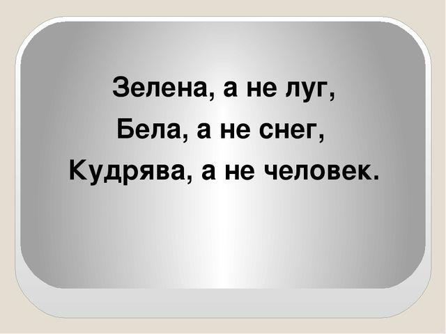 Зелена, а не луг, Бела, а не снег, Кудрява, а не человек.