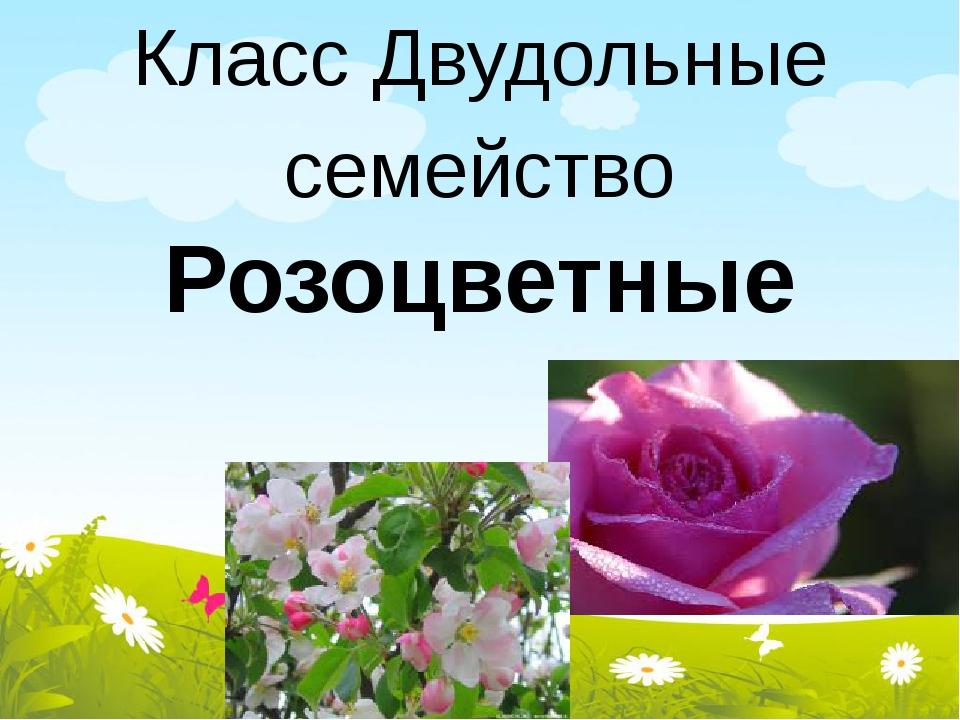 Класс Двудольные семейство Розоцветные