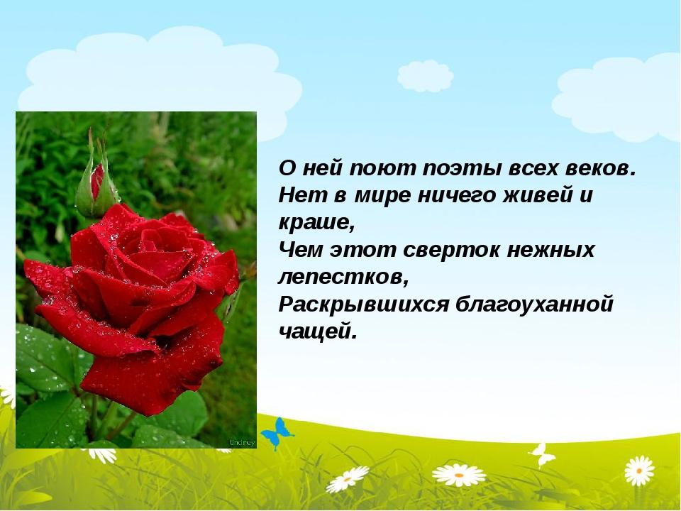 О ней поют поэты всех веков. Нет в мире ничего живей и краше, Чем этот сверт...