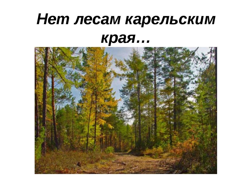 Нет лесам карельским края… (Ю.Никонова)