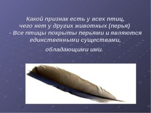 Какой признак есть у всех птиц, чего нет у других животных (перья) - Все пти