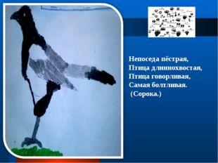 Непоседа пёстрая, Птица длиннохвостая, Птица говорливая, Самая болтливая. (Со