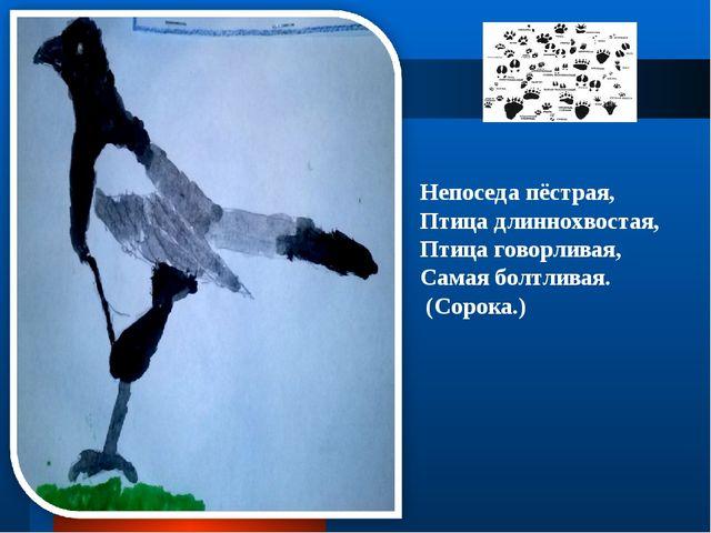 Непоседа пёстрая, Птица длиннохвостая, Птица говорливая, Самая болтливая. (Со...