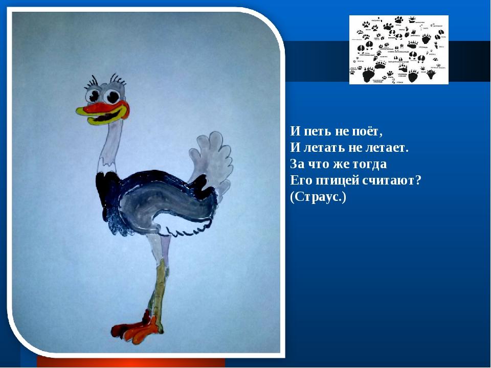 И петь не поёт, И летать не летает. За что же тогда Его птицей считают? (Стра...