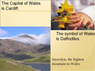 Snowdon, the highest mountain in Wales The symbol of Wales is Daffodiles. The