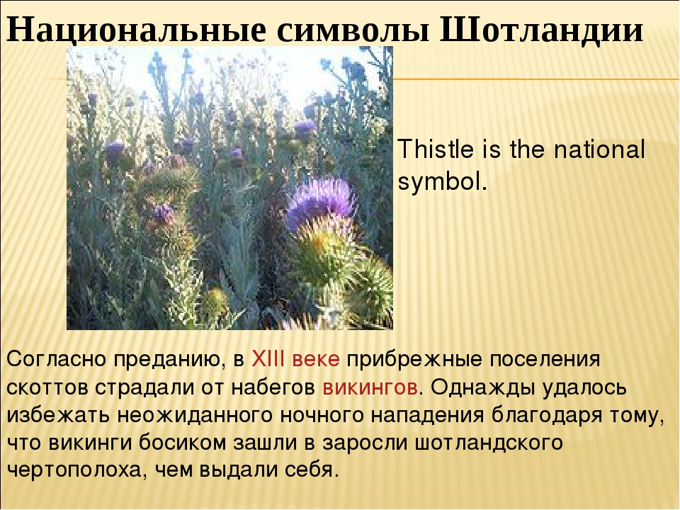 Национальные символы Шотландии Thistle is the national symbol. Согласно преда...